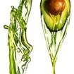 Nature Box Repair Cream Avocado Κρέμα Περιποίησης Μαλλιών για Επανόρθωση με Έλαιο Avocado 150 ml